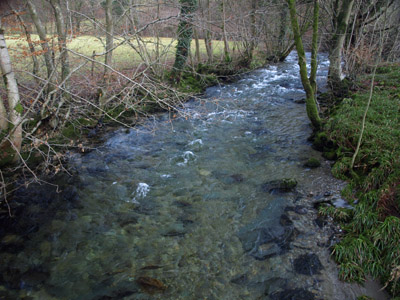Trout Beck