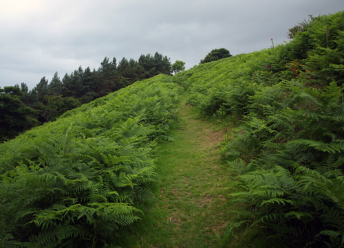 path above Salmonds hill
