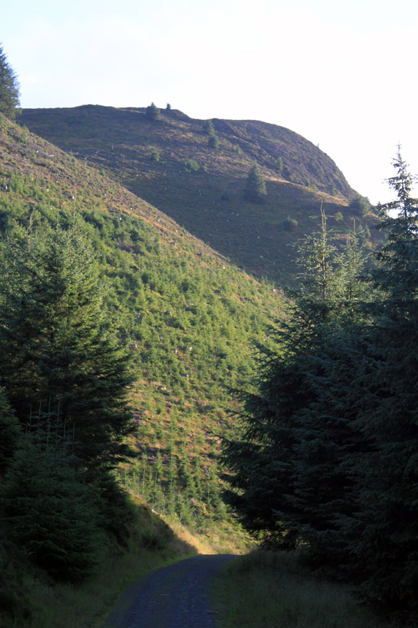 Forest track by Whinlatter Gill