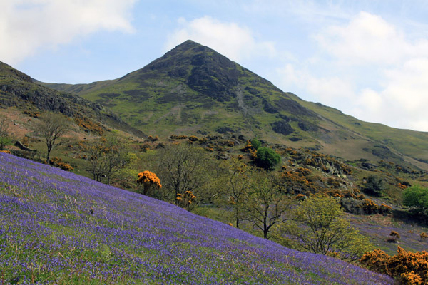 Whiteless Pike and the bluebells