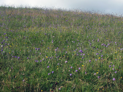 Late August meadow Abney