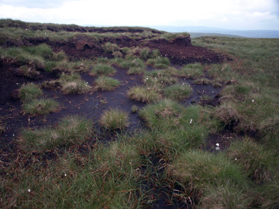 Black Fell underfoot terrain