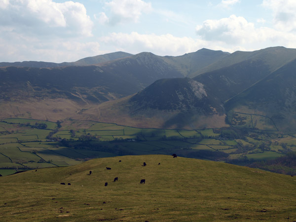 Catlle pasture on Fellbarrow