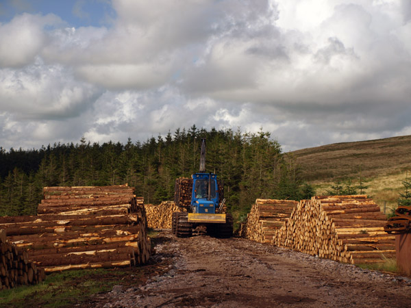 Felling in heckbarley Forest
