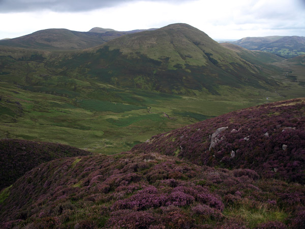 Hen Comb from Gale Fell