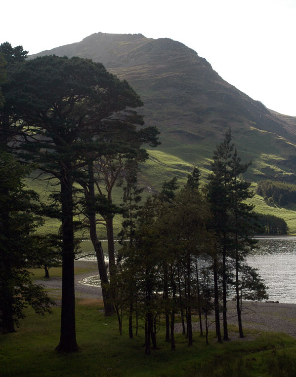 From the pines at the head of Buttermere