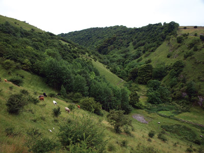 Wooded Cressbrook Dale