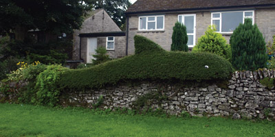 Topiary shark in Taddington
