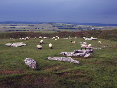 sheep at Arbor Low