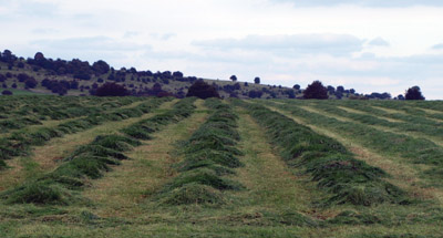 Blakelow Hill silage cut