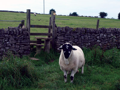 Ewe goes there? Ram stile steward