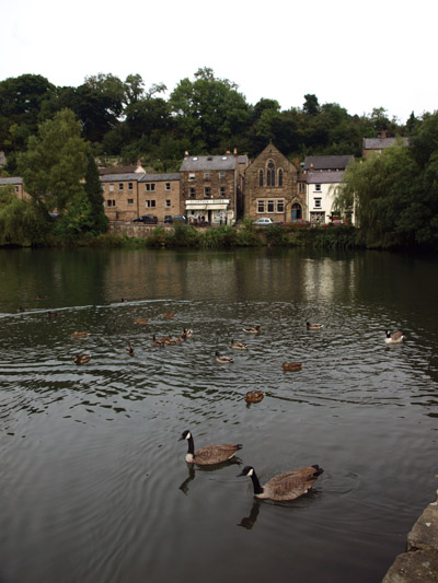 Ducks and geese on Cromford Pond