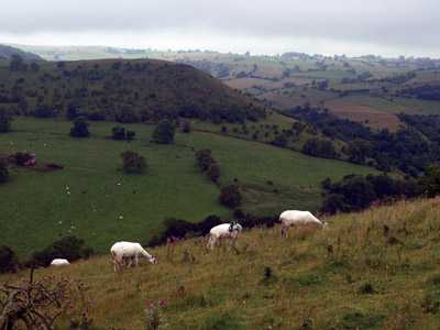 sheep grazing with view of Old Park Hill