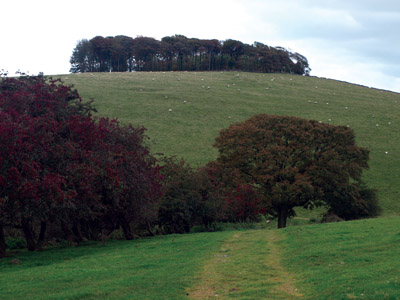 Hazelton Clump from the bridle track leading south from Upper Musden