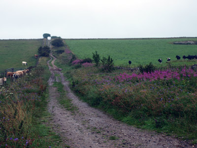 Green Lane from the Hartington road