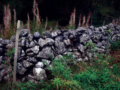 Drystone wall in Coldeaton Dale