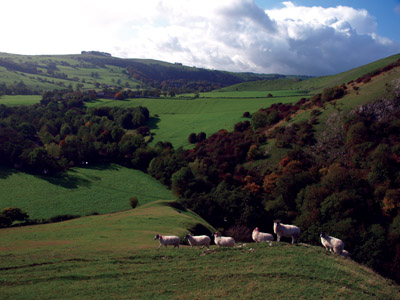 Sheep wander off the steep western slopes of Thorpe Cloud