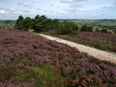 Track through the heather on Revidge