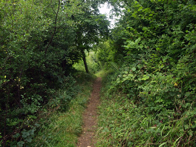 High path leading through Ladyside Wood