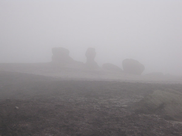 Kinder Low in mist