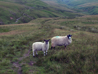 sheep pose during descent