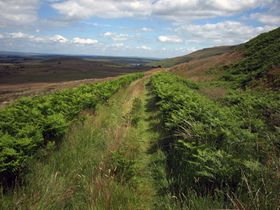 Tramway through bracken